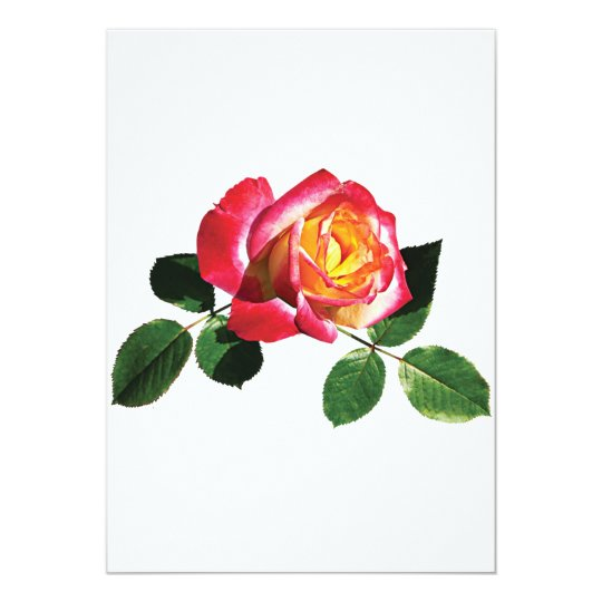 Red and Yellow Rose Card