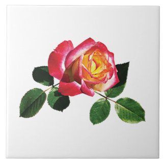 Red and Yellow Rose Ceramic Tile
