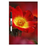 Red and yellow rose dry erase white board