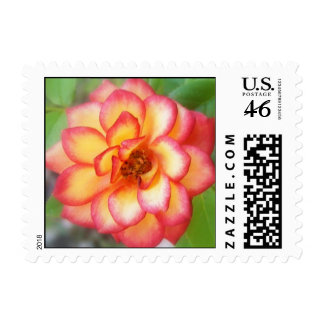 Red and Yellow Rose Stamps