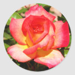 Red and Yellow Rose Sticker