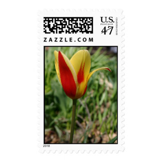 Red and yellow single tulip flower blossom stamp