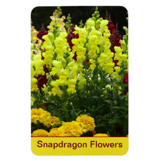 Red and Yellow Snapdragon Flower Vinyl Magnets