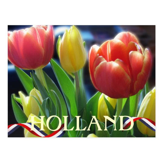 Red and Yellow Spring Tulips Holland Postcard