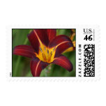 Red and yellow star lily stamp