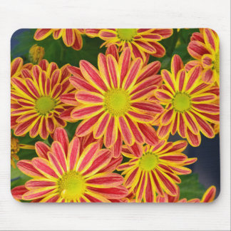 Red and yellow striped chrysanthemum flowers mouse pad