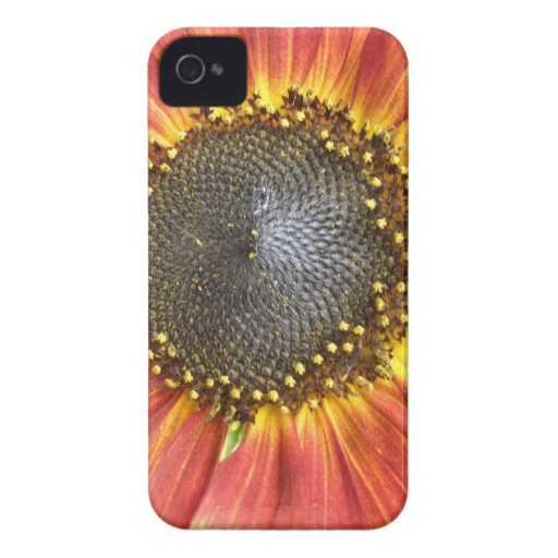 Red and Yellow Sunflower Blackberry Bold Case