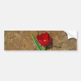 Red and Yellow Tulip Bumper Sticker