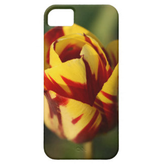 Red and Yellow Tulip Flower iPhone SE/5/5s Case
