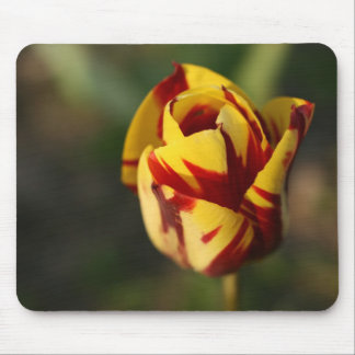 Red and Yellow Tulip Flower Mouse Pad
