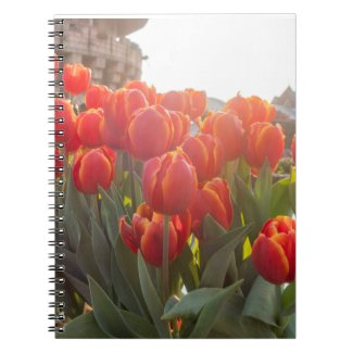Red and Yellow tulip flowers  for happy spring Notebook