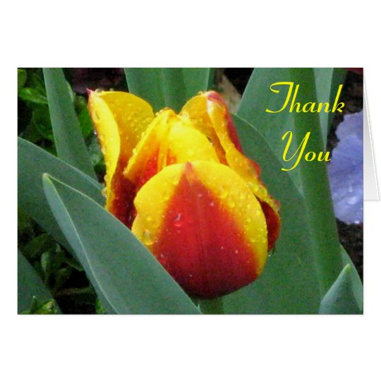 red and yellow tulip thank you note card