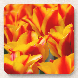 Red and Yellow Tulips Drink Coaster