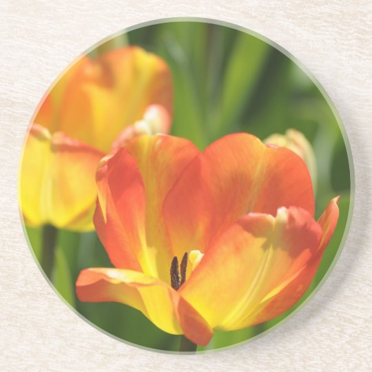 Red and yellow tulips in spring garden drink coaster