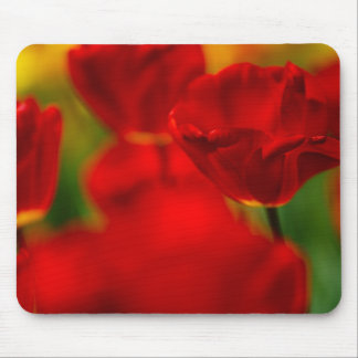 Red and Yellow Tulips Mouse Pad