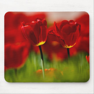 Red and Yellow Tulips Mousepad