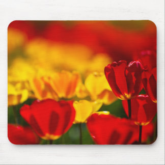 Red and Yellow Tulips Mouse Pads