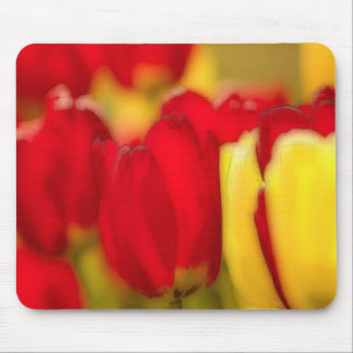 Red-and-Yellow-Tulips Mouse Pad
