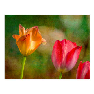 Red and yellow tulips on textured background postcard