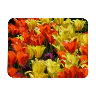 Red and Yellow Tulips Rectangular Photo Magnet