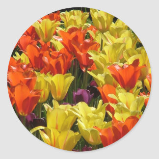 Red and Yellow Tulips Classic Round Sticker