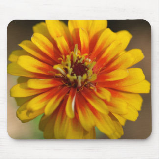 Red and Yellow Zinnia Mousepad