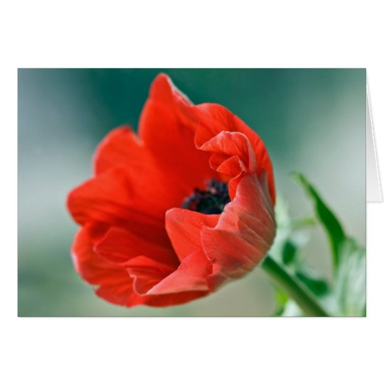 Red Anemone Flower Card