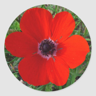 Red anemone stickers