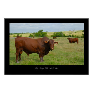 Red Angus Cattle Poster Print