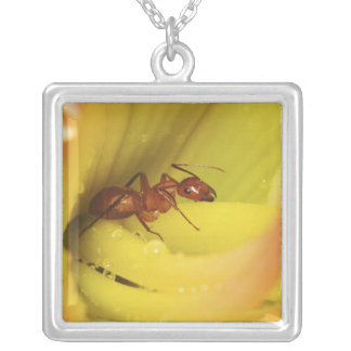 Red Ant, Formica spp. Silver Plated Necklace