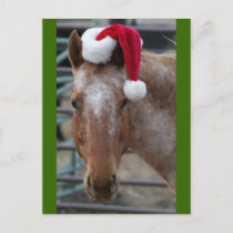 Red Appaloosa with Santa Hat Holiday Postcard
