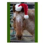Red Appaloosa with Santa Hat Post Cards