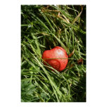 Red Apple Poster/Print