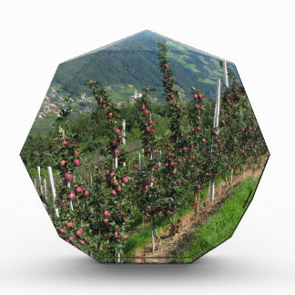 Red apple trees on a background of mountains award