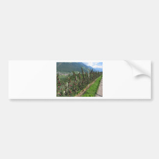Red apple trees on a background of mountains bumper sticker