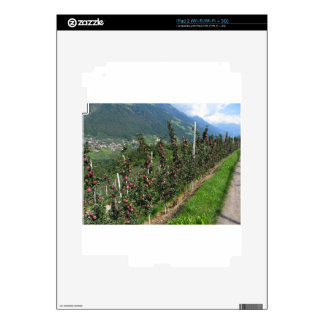 Red apple trees on a background of mountains iPad 2 decal