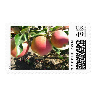 Red Apple Trio Postage