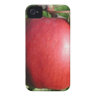 Red Apple with a Leaf iPhone 4 Cases