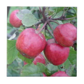 Red Apples in the Tree Ceramic Tile