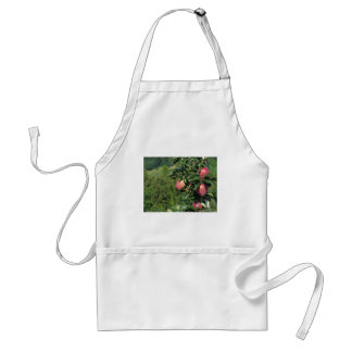 Red apples on tree branches apron