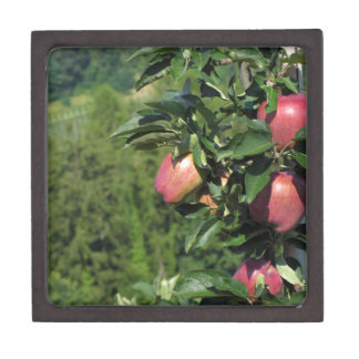 Red apples on tree branches jewelry box