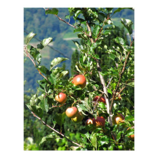 Red apples on tree branches letterhead
