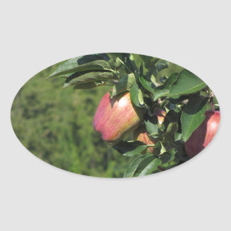 Red apples on tree branches oval sticker