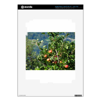 Red apples on tree branches iPad 3 skin