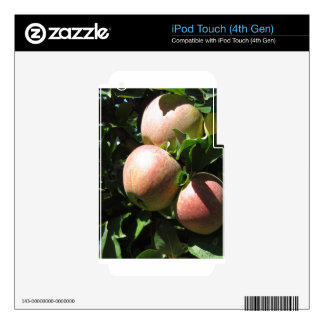 Red apples on tree branches iPod touch 4G decal