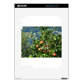 Red apples on tree branches skins for iPad 2