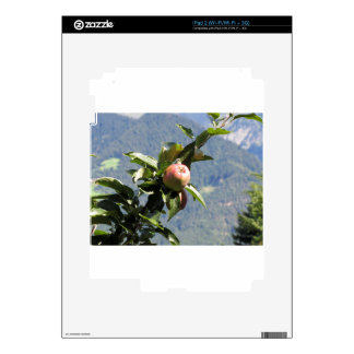 Red apples on tree branches iPad 2 decal