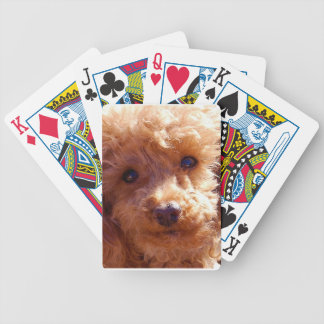 Red Apricot Poodle Dog Playing Cards