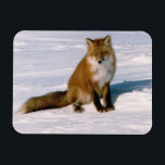 "Red Arctic Winter Fox Refrigerator Flexible Magnet<br><div class=""desc"">Cute arctic red fox soaking up the morning air, delightful pose captured and printed on this excellent flexible refrigerator magnet. Available in 2 sizes for your convenience and printed on flexible magnet stock. Great as a gift item all through the year, especially birthdays. Add some d&#233;cor to any refrigerator or...</div>"