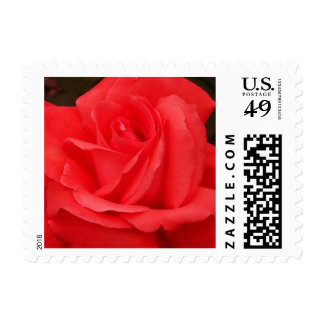 Red as a Rose Postage